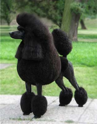 Ваше первое домашнее животное?))