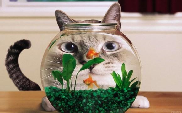 покажите пожалуйста красивый рисунок кота/кошки, который можно вышить?